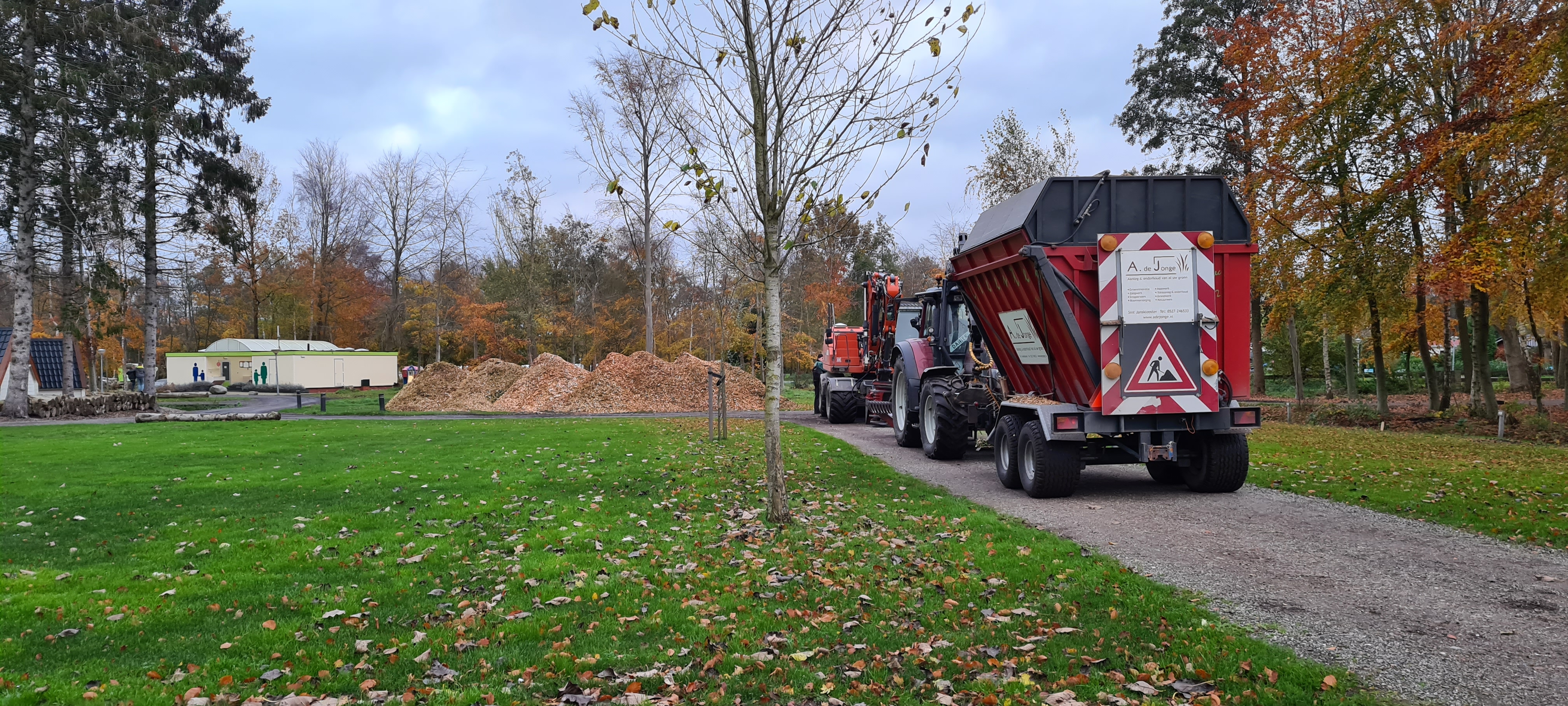 Zieke en gevaarlijke bomen weghalen