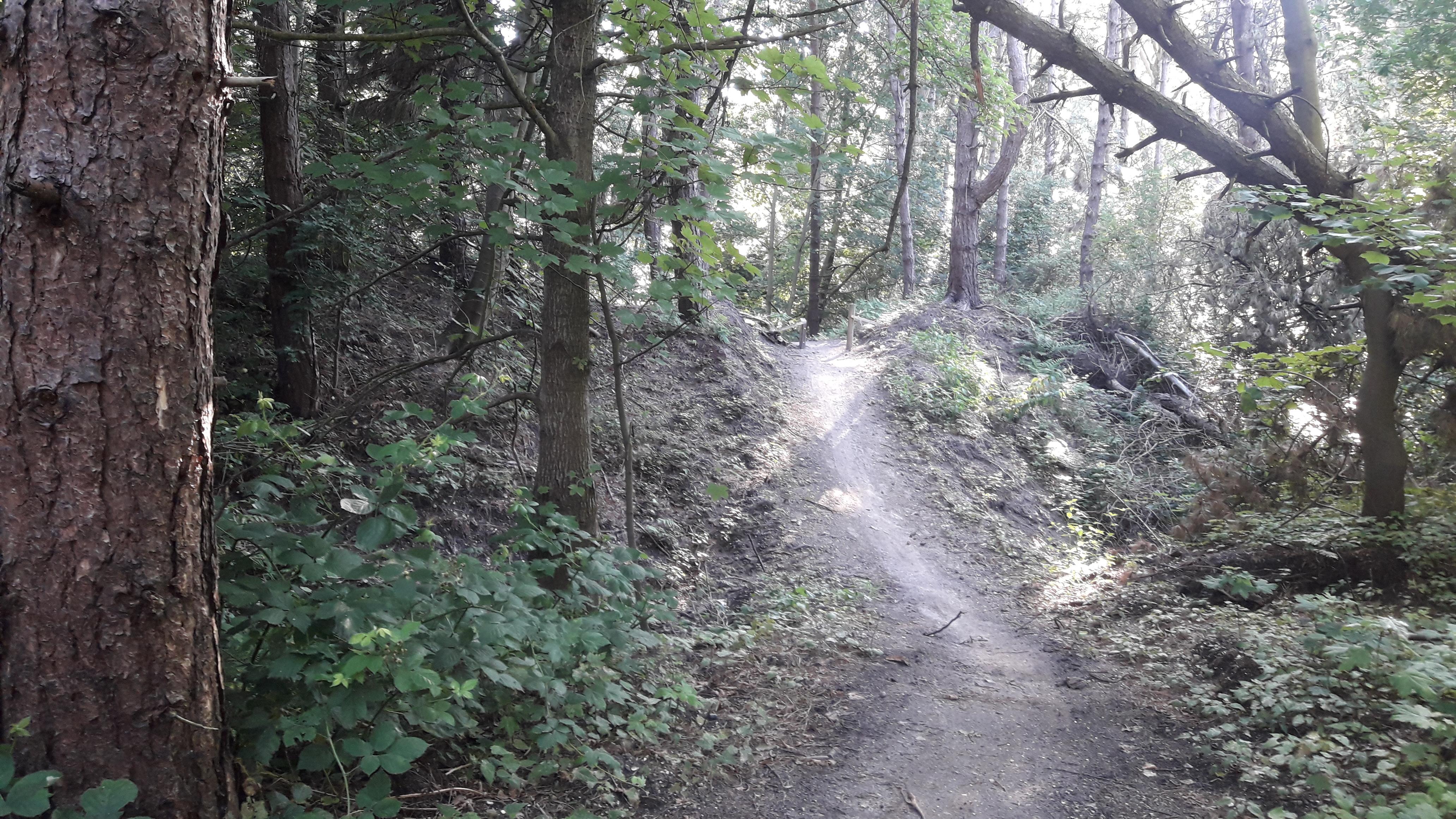 MTB-route door het Urkerbos