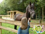 Kamperen met je paard